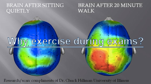 Why exercise during exams?